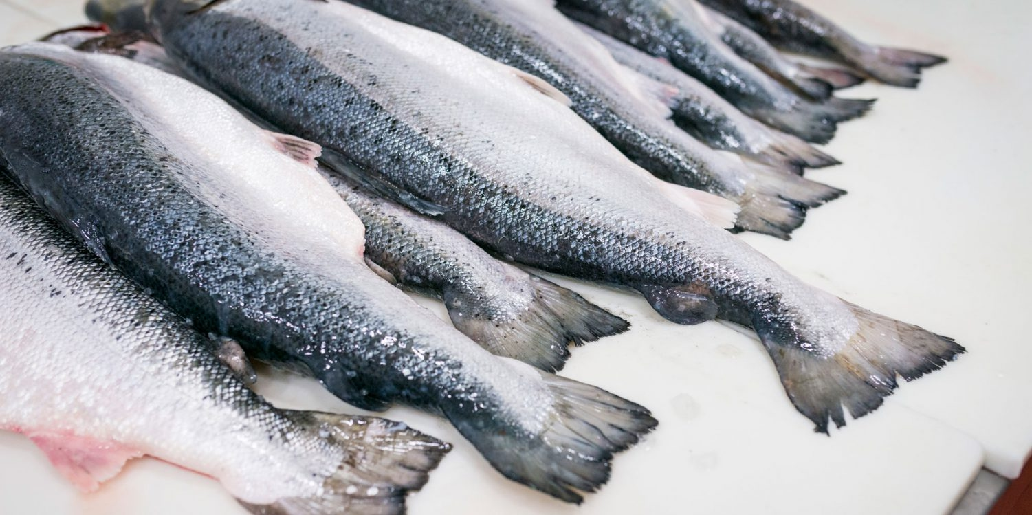Sustainable Catch Seafood